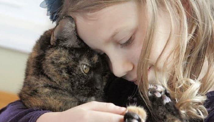 que hacen los gatos antes de morir