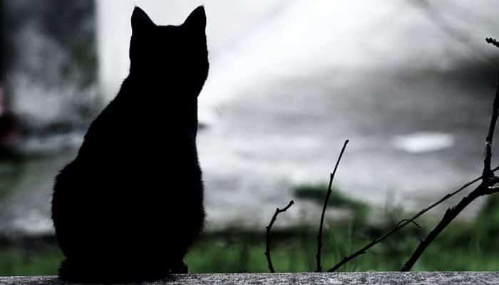 los misterios ocultos de los gatos