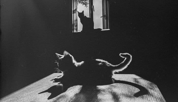 que misterios tienen los gatos