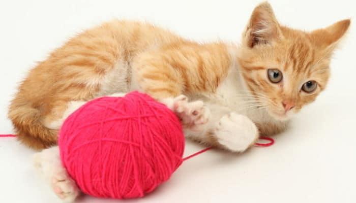 que nombres hay para gatos