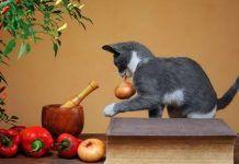que verduras pueden comer los gatos