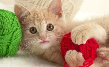 esterilización en gatos