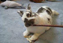 juguetes para conejos