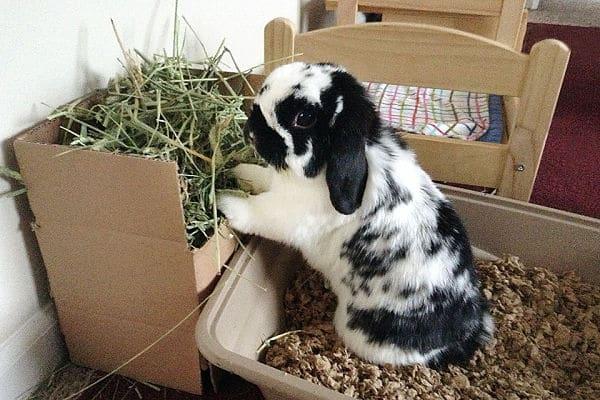 Top 5 Mejores Juguetes Para Conejos 161 Diversi 243 N Para Tu