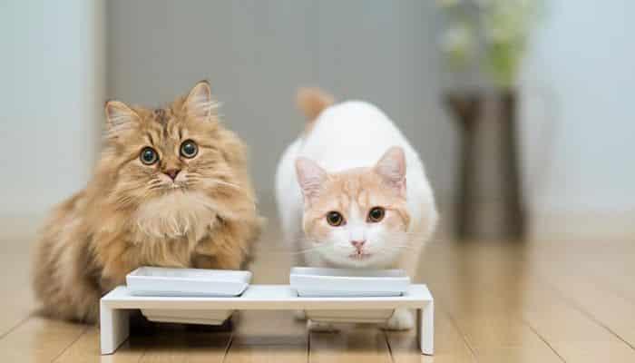 que alimento para gatos es mejor