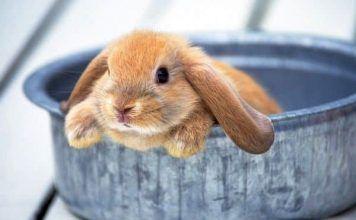 esterilización en conejos