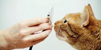 diarrea con sangre en gatos