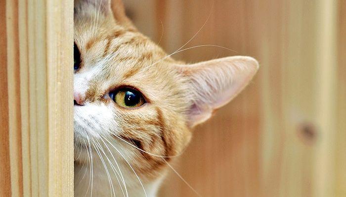 una enfermedad poco común en gatos