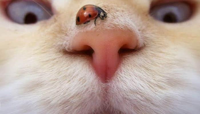 nariz seca en gatos