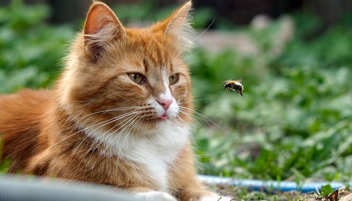 picadura de abeja en gatos