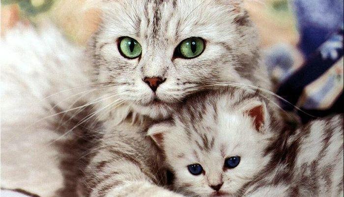 tres enfermedades comunes en los gatos