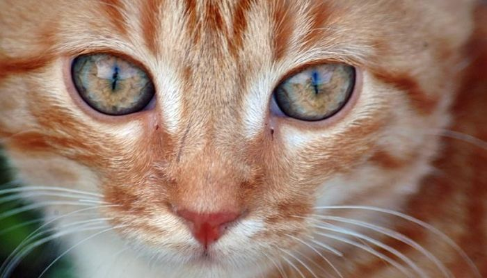 los cuidados en nuestro gato son primordiales