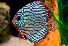 peces más bonitos del mundo