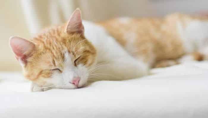 como saber si un gato está enfermo