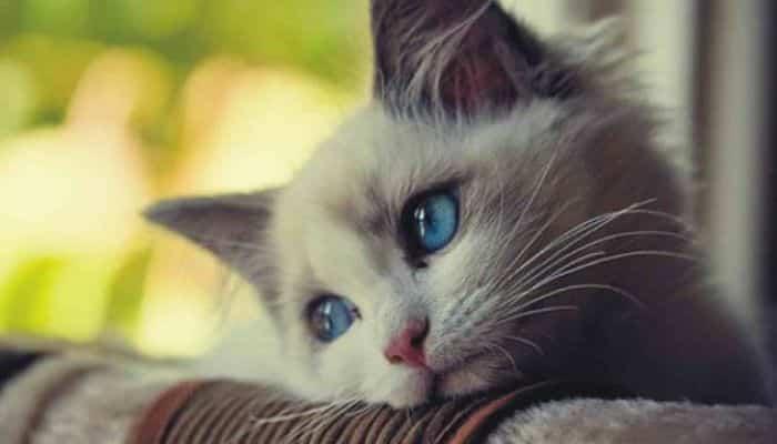 eutanasia en gatos