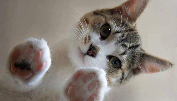 estar atento a lo que el gato consume