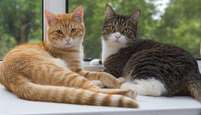 problemas respiratorios en gatos pueden ser mortales