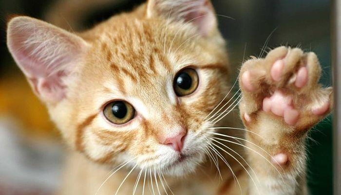problemas respiratorios en gatos