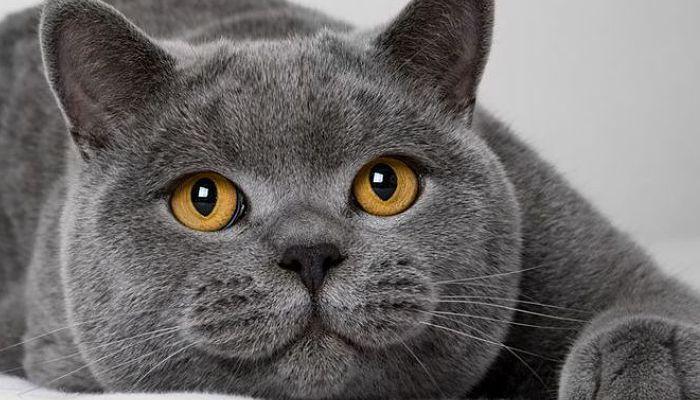 síntomas de la queratitis en gatos