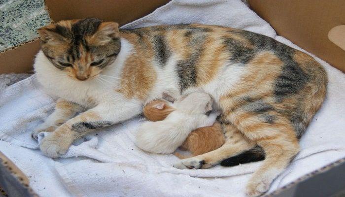 cómo ayudar en un parto de gatas|