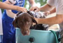 Bañar a mi perro