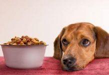 alimentar un perro