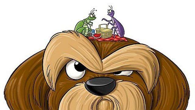 C mo terminar con las pulgas en los perros eliminar las - Acabar con las pulgas en casa ...