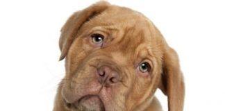 inmunidad de mi perro