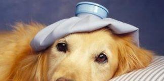 enfermedades comunes de perros