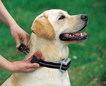 Revise nuestros consejos de adiestramiento con collares for Como hacer un collar para perro