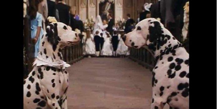 perros famosos