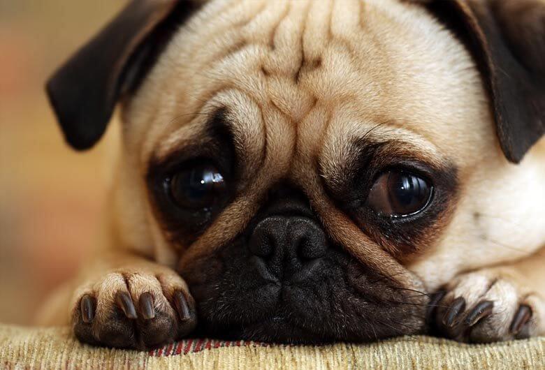 Por que los perros lloran