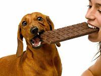 Por que no pueden comer chocolate los perros