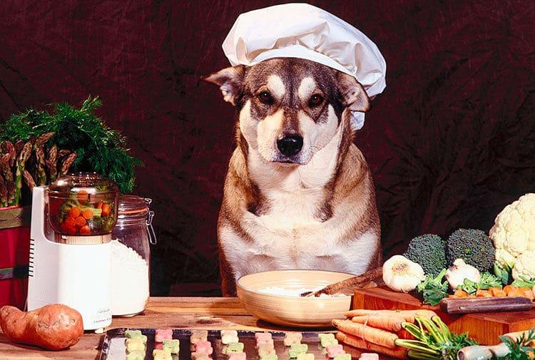 Una dieta balanceada puede ayudar a la salud de tu perro