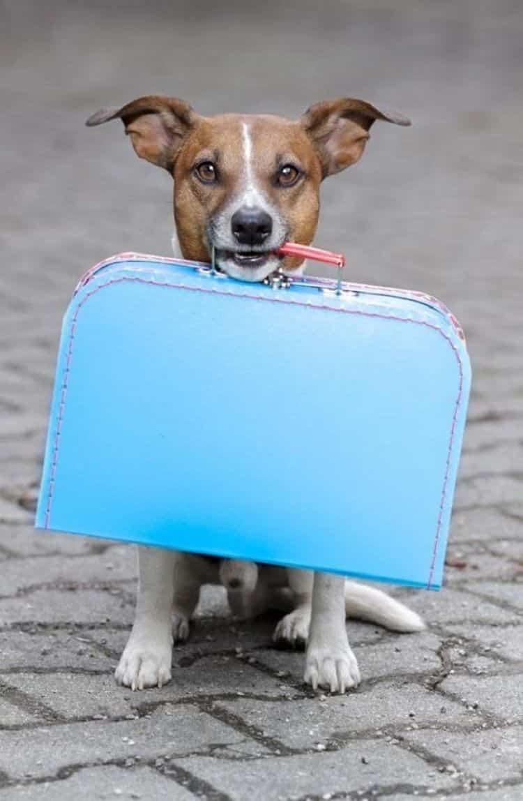 Investiga todos los documentos que necesitas para que tu mascota viaje contigo