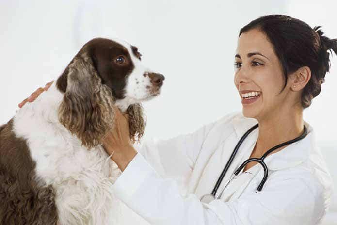 diagnostico de gastroenteritis en perros