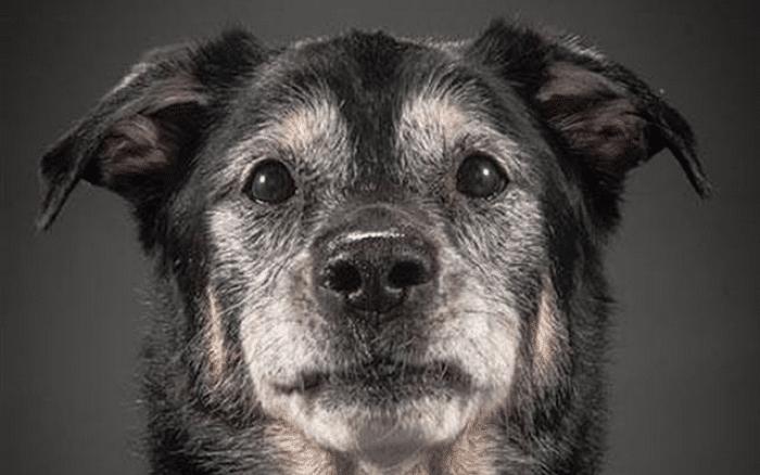Debemos estar atentos a los síntomas de envejecimiento de nuestro perro