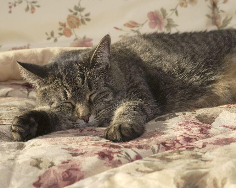 Los gatos duermen en promedio 13 o 14 horas al día