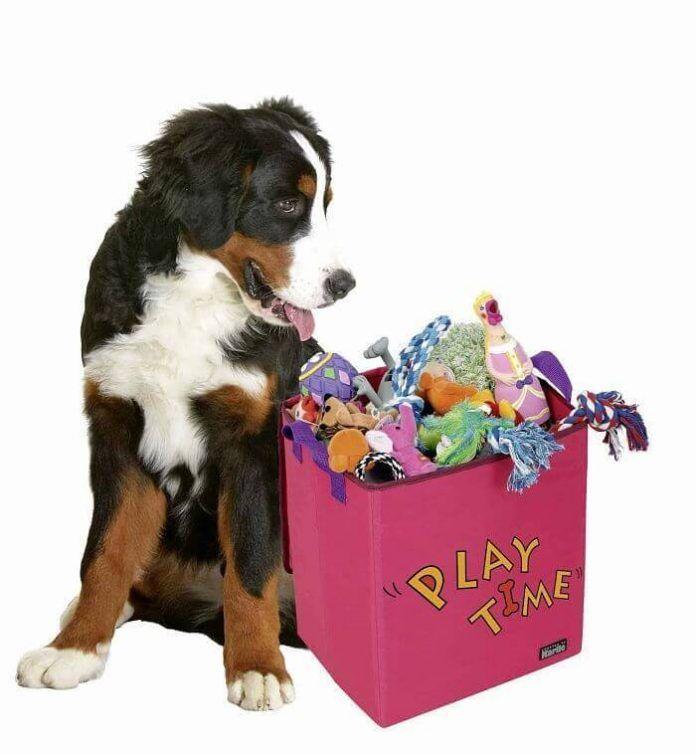 juguetes para nuestras mascotas