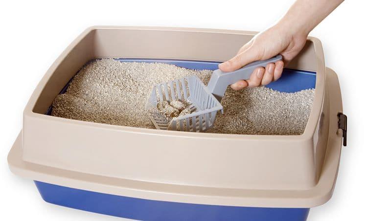 Mantener la caja de arena limpia es muy importante para asegurar que nuestro gato esté cómodo