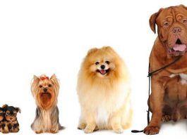 nombres para perros hembra