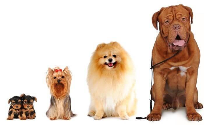 M s de 500 incre bles nombres para perros hembra - Es malo banar mucho a los perros ...