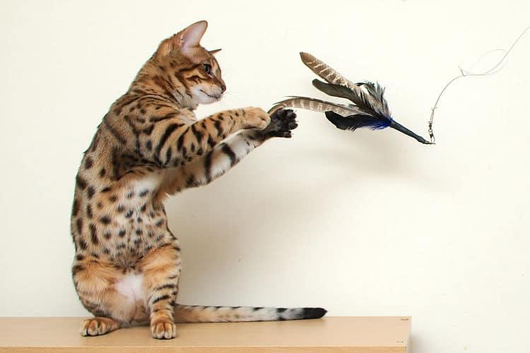 El juego es una excelente fuente de ejercicio para nuestro gato
