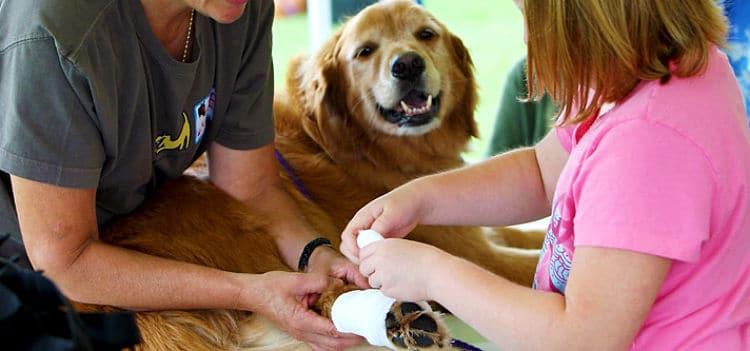 Es importante que sepamos que emergencias se pueden tratar en casa y cuales necesitan asistencia veterinaria urgente
