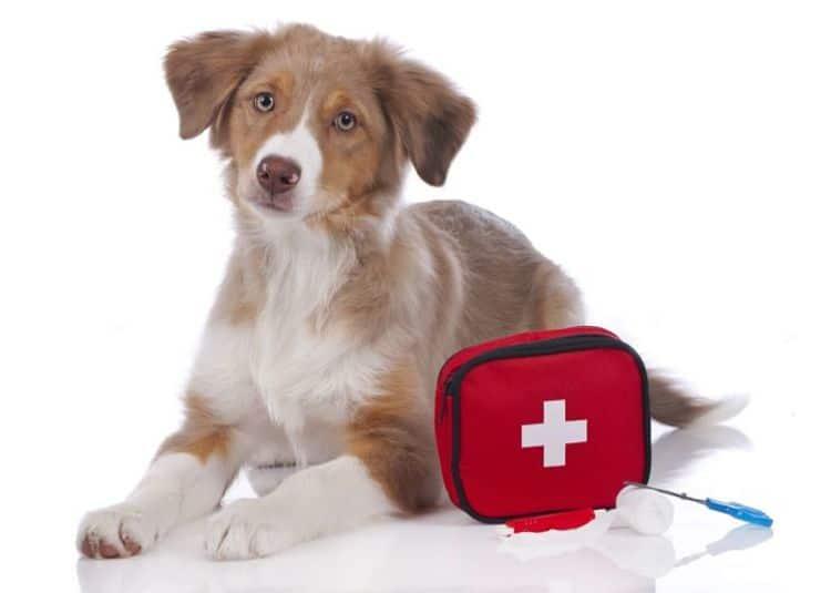 Es importante tener a mano un kit de primeros auxilios especial para nuestras mascotas