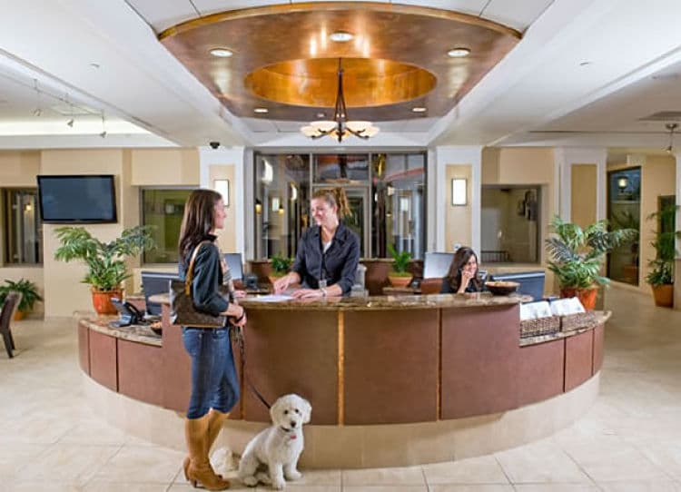 Es muy importante buscar un hospedaje que admita mascotas