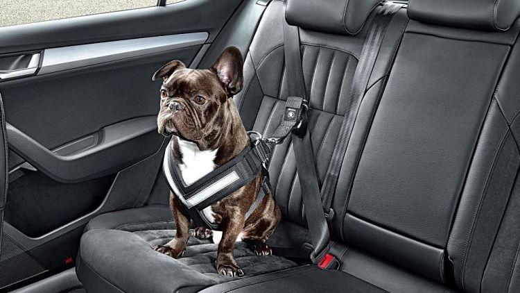 En la imagen vemos un cinturón de seguridad ajustable para mascotas