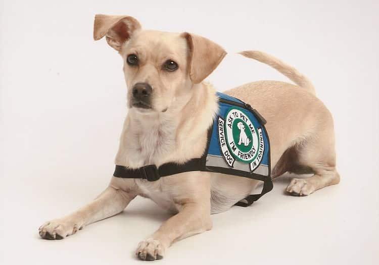 Perros De Servicio Asistencia Para Todos