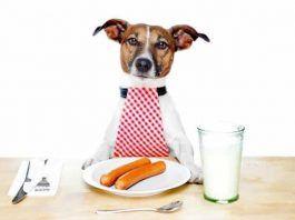 alimentos malos para los perros
