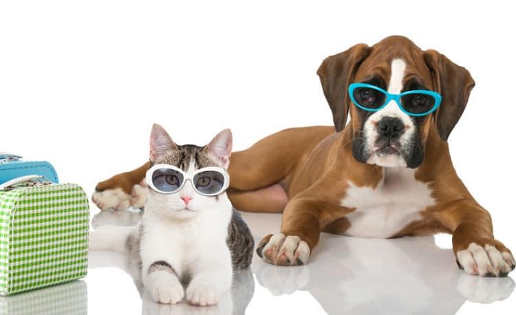 hoteles-que-admiten-perros-en-Benidorm2